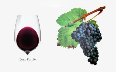 Các giống nho sản xuất rượu vang đỏ