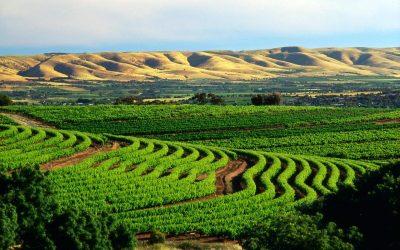 Vùng nho Barossa Valley – Australia