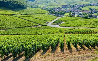 Vùng nho Bordeaux – Pháp