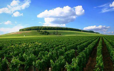 Vùng nho Burgundy – Pháp