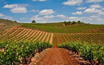 Vùng nho Rioja – Tây Ban Nha